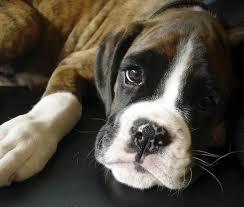 Welke hond past bij jou - Ontwikkel een kleine huisinvoer ...