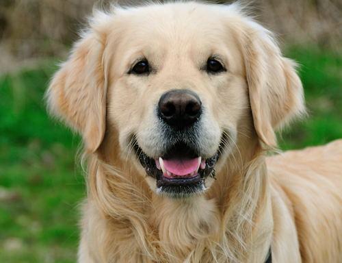 Als je aan een hond denkt, welk karakter vind je dan leuk?