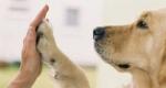 Waarom neemt u een hond?