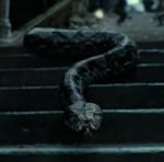 Hoe heet de slang van Voldemort?