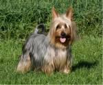 Welk hondenras is dit?