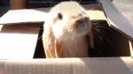 Hoe heet dit nieuwe schattige konijntje van Maïsha en Wouter?