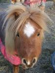 Wat is deze aftekening op het hoofd van dit paard?