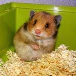 Hoe heet Pascal zijn hamster?