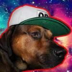 Is Bumper de hond van Enzo?