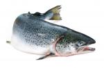 Welke vis is dit?