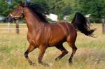 Welk paardenras is dit?