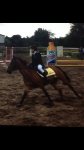 Welk gedeelte van de hoef van je paard is heel gevoelig?