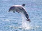 Dolfijnen en walvissen slapen met 1 oog open.