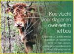 Hoe heet de koe die wist te ontsnappen aan de slager en zo de beroemdste koe van Nederland werd?