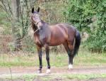 """Een ziekte waardoor een paard last krijgt van zijn buik heet """"maagzweer"""""""