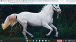 Een paard is een kuddedier?